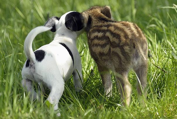 Un cane e un cucciolo di cinghiale