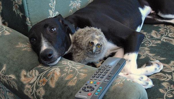 Un cane e un gufo