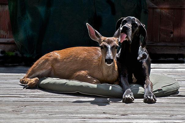 Un cervo e un cane
