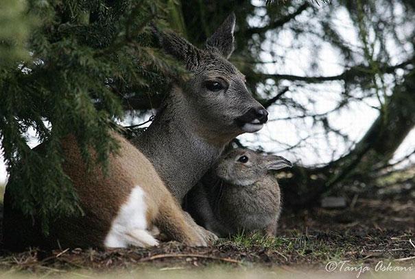 Un coniglio e un cervo