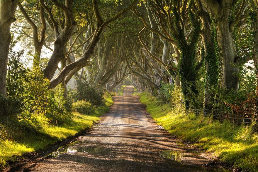 foto-tunnel-magici-alberi-fiori-1