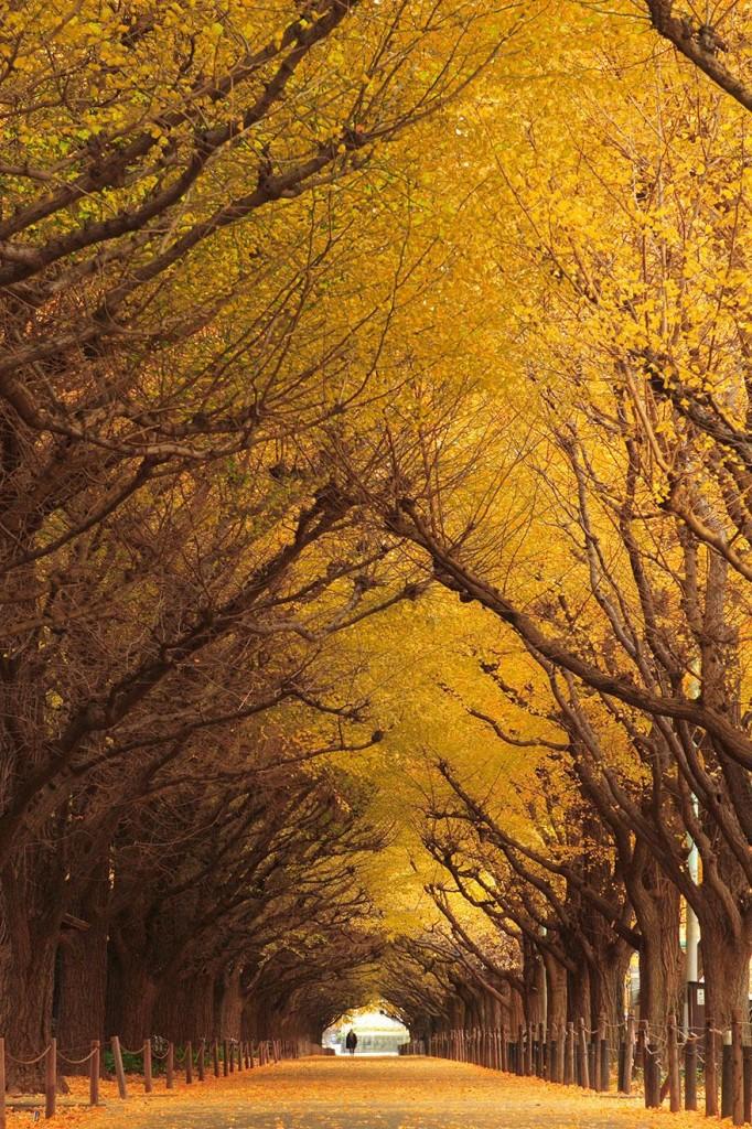 foto-tunnel-magici-alberi-fiori-10