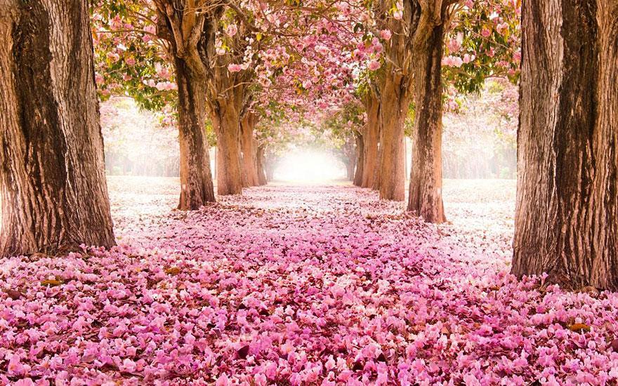 foto-tunnel-magici-alberi-fiori-11