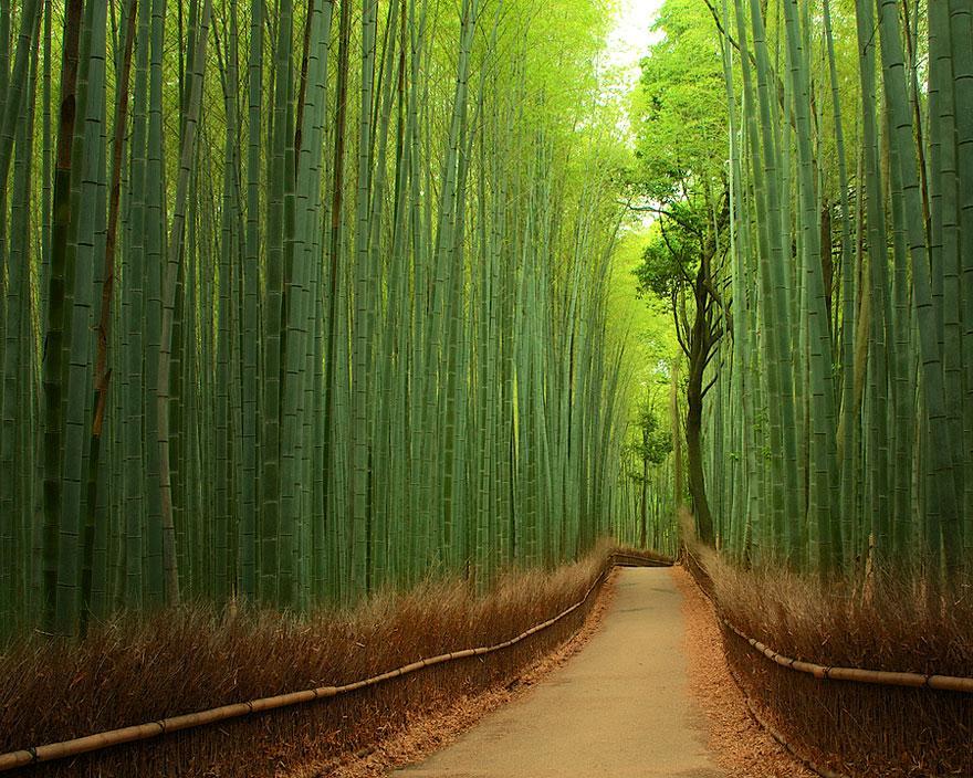 foto-tunnel-magici-alberi-fiori-12