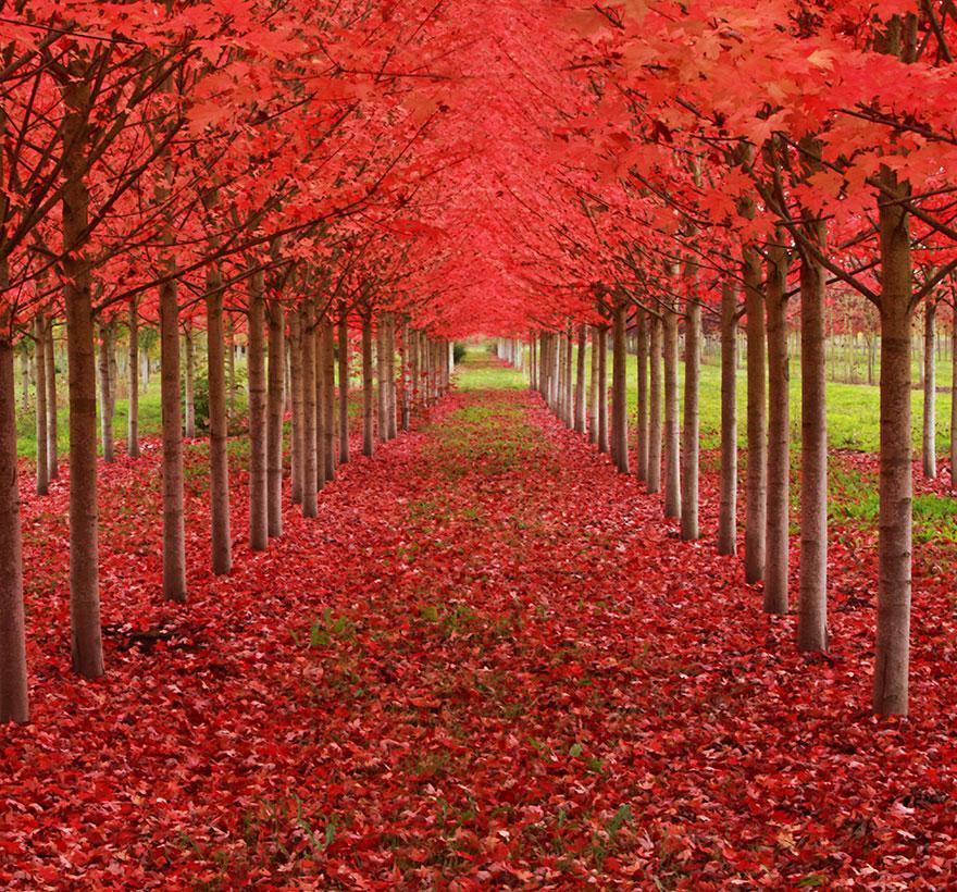 foto-tunnel-magici-alberi-fiori-13