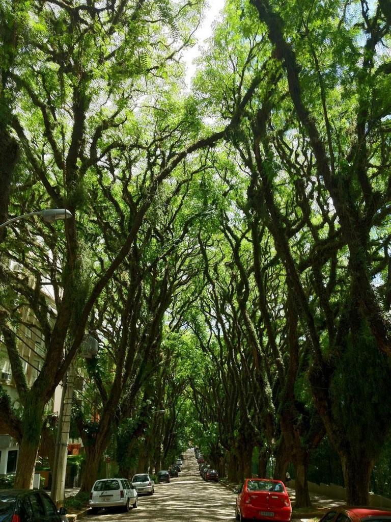 foto-tunnel-magici-alberi-fiori-15