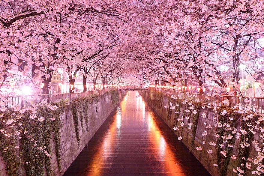 foto-tunnel-magici-alberi-fiori-16