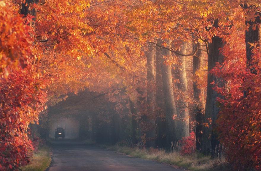 foto-tunnel-magici-alberi-fiori-18