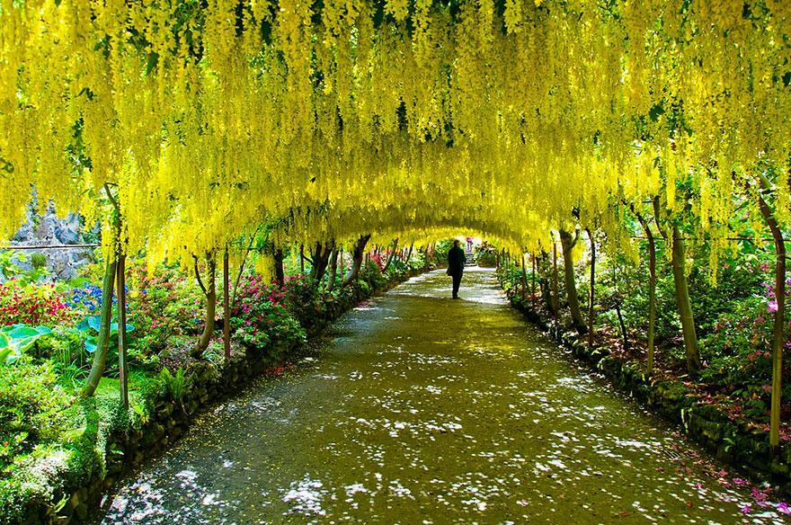 foto-tunnel-magici-alberi-fiori-19