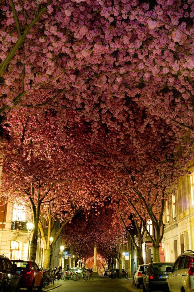 foto-tunnel-magici-alberi-fiori-2