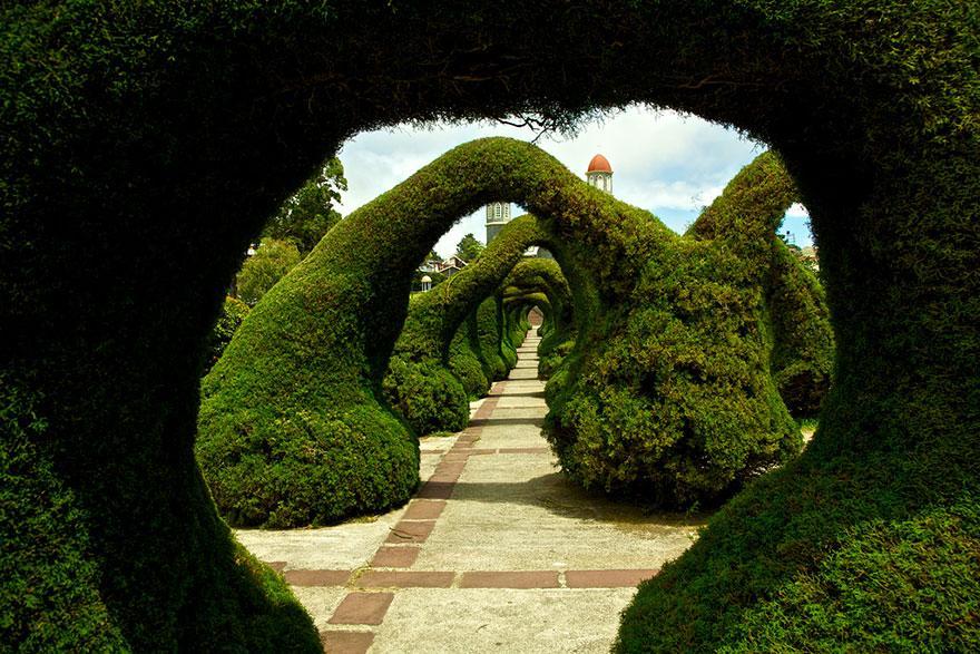 foto-tunnel-magici-alberi-fiori-20