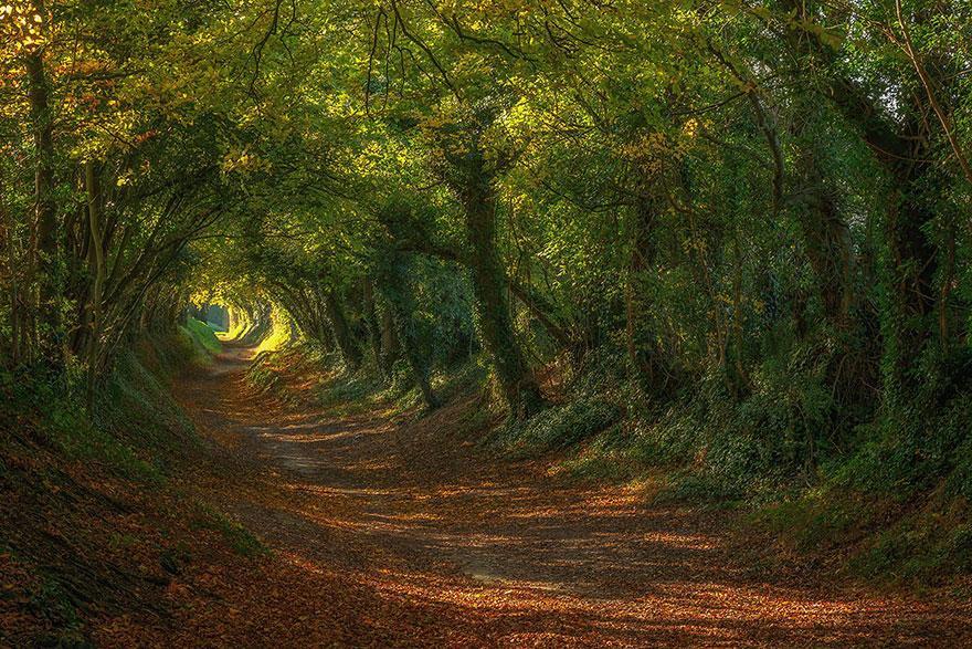 foto-tunnel-magici-alberi-fiori-21