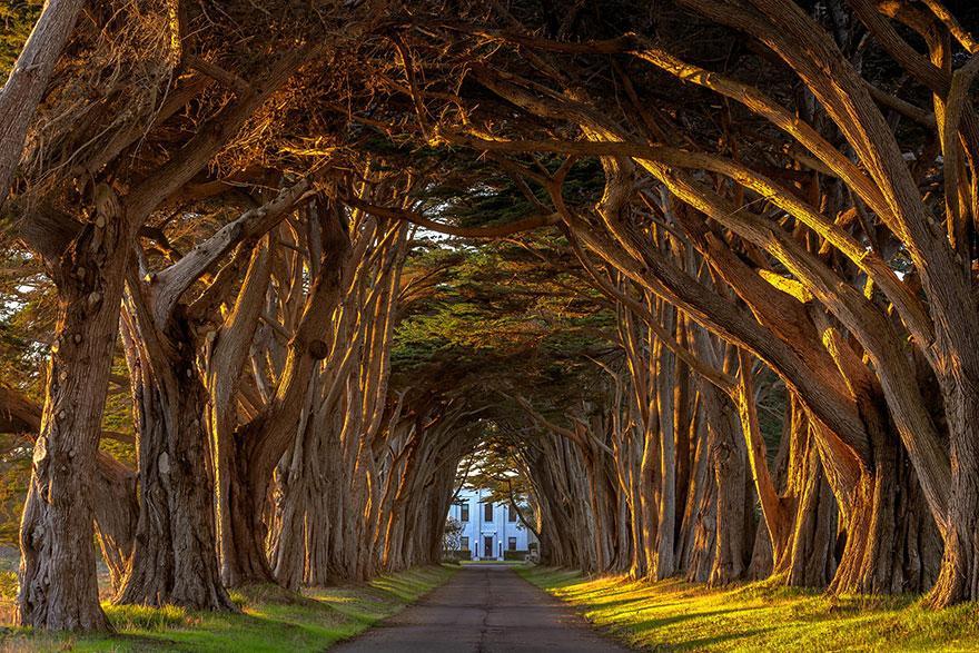 foto-tunnel-magici-alberi-fiori-22