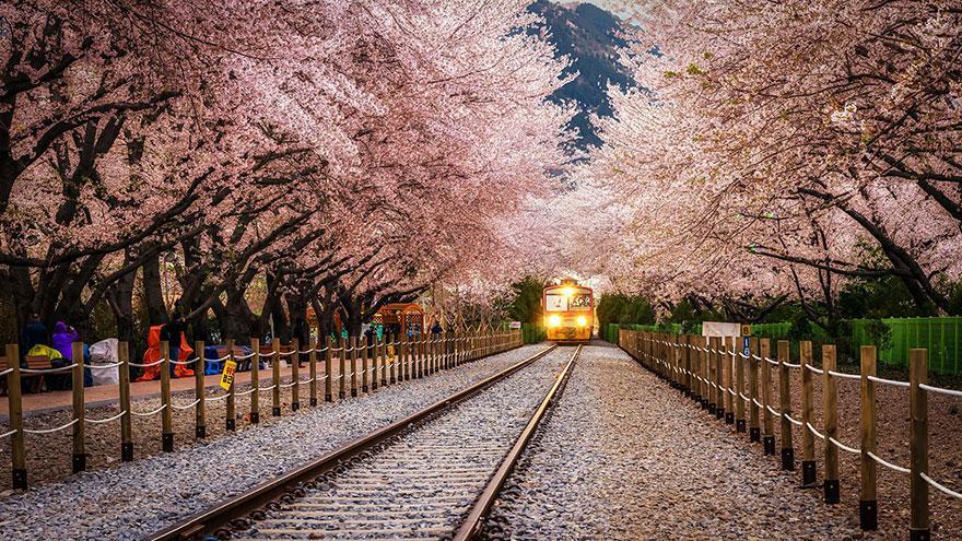 foto-tunnel-magici-alberi-fiori-23