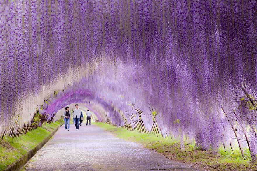 foto-tunnel-magici-alberi-fiori-3