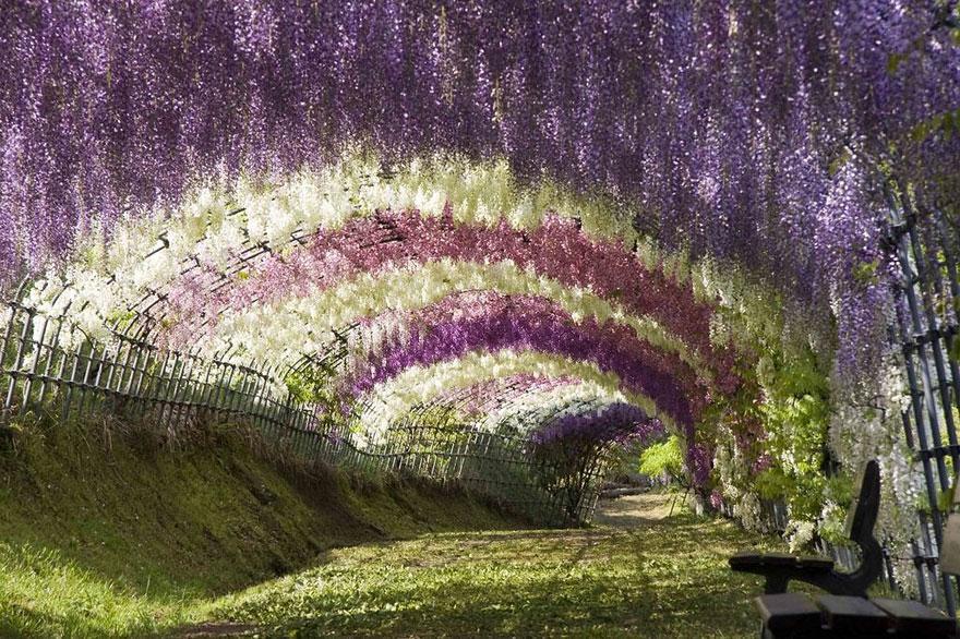 foto-tunnel-magici-alberi-fiori-4