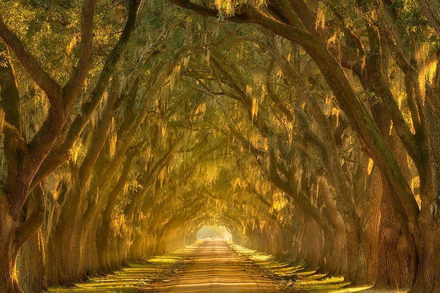 foto-tunnel-magici-alberi-fiori-5