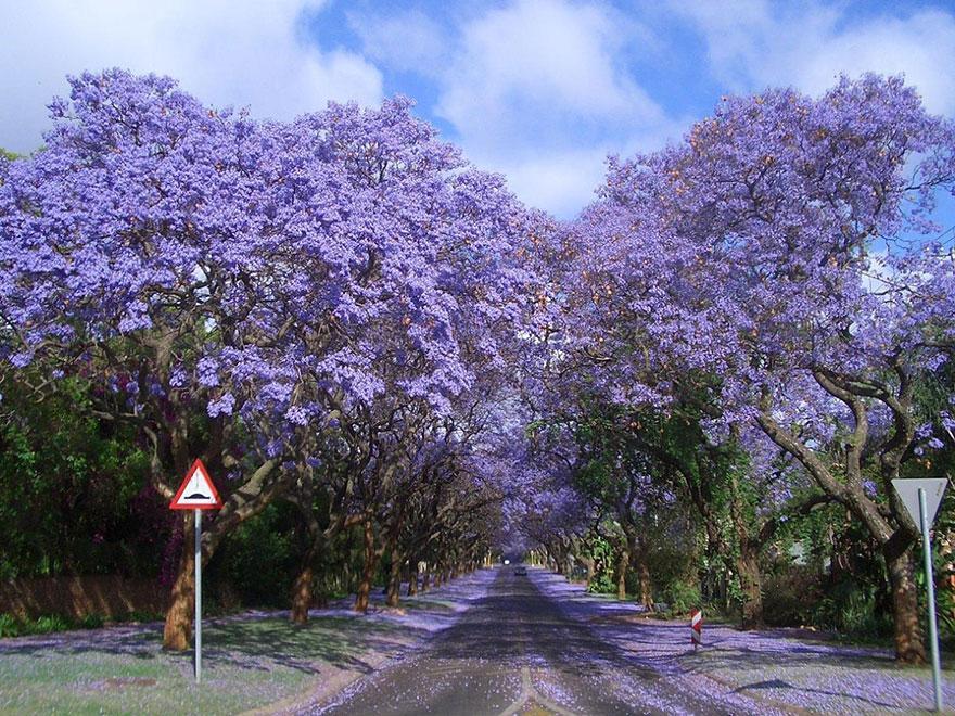 foto-tunnel-magici-alberi-fiori-6