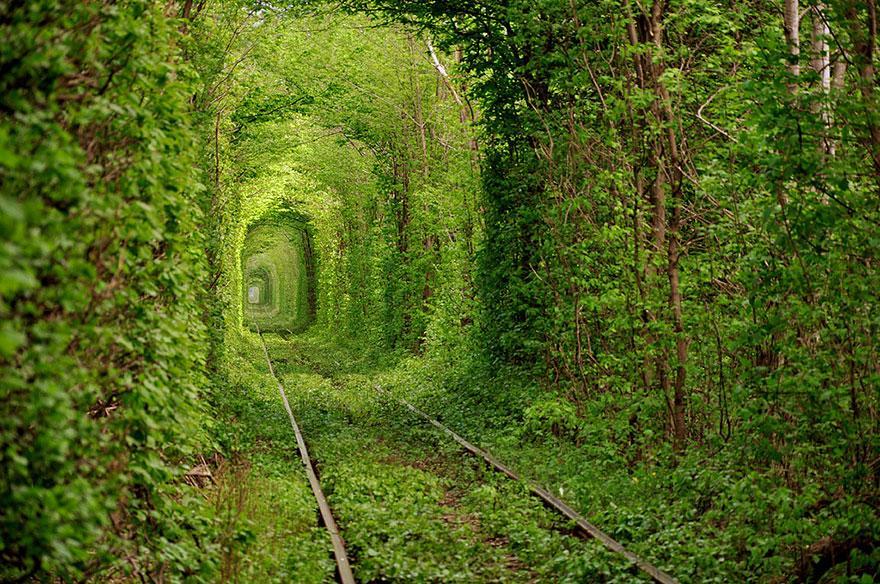 foto-tunnel-magici-alberi-fiori-7