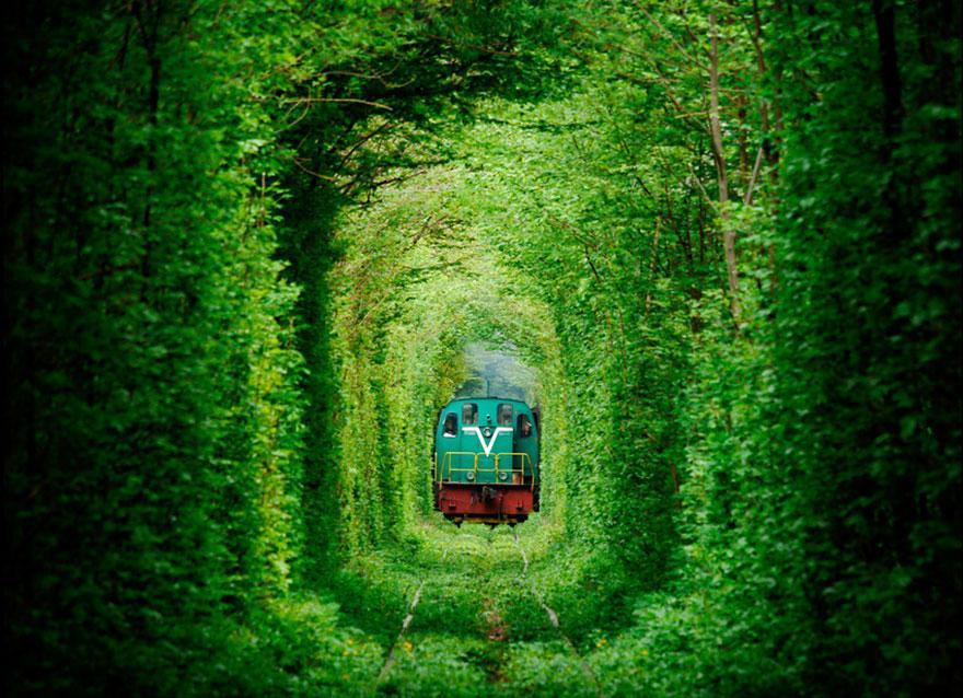 foto-tunnel-magici-alberi-fiori-8