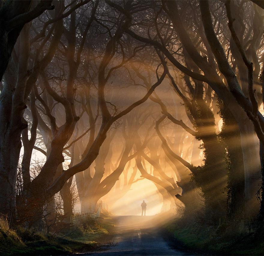 foto-tunnel-magici-alberi-fiori