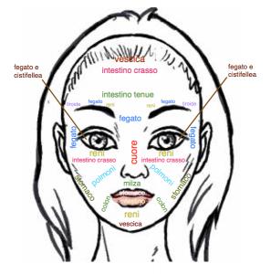 mappa-faccia-organi