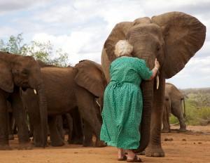 Dafne elefant 1