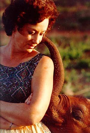 dafne elefant 2