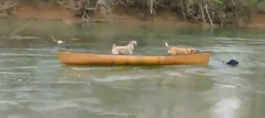 cani salvataggio1