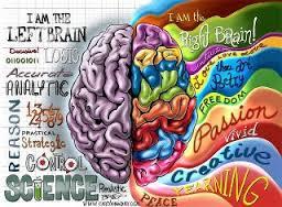cervello due emisferi