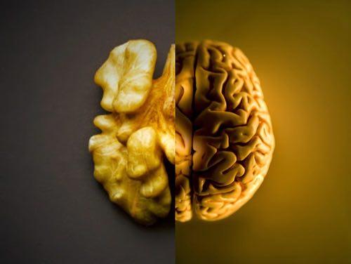 cervello noce