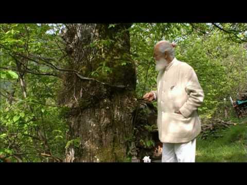 Tiziano Terzani - L'albero
