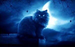 gatto-visione-notturna