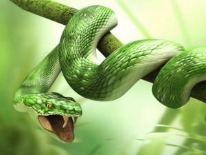 serpente_verde