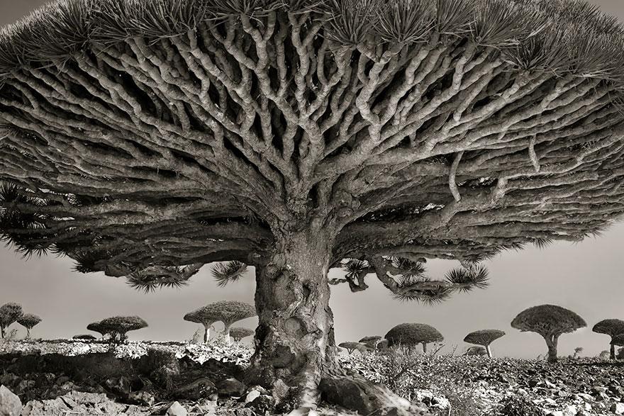 oldest-trees-beth-moon-1