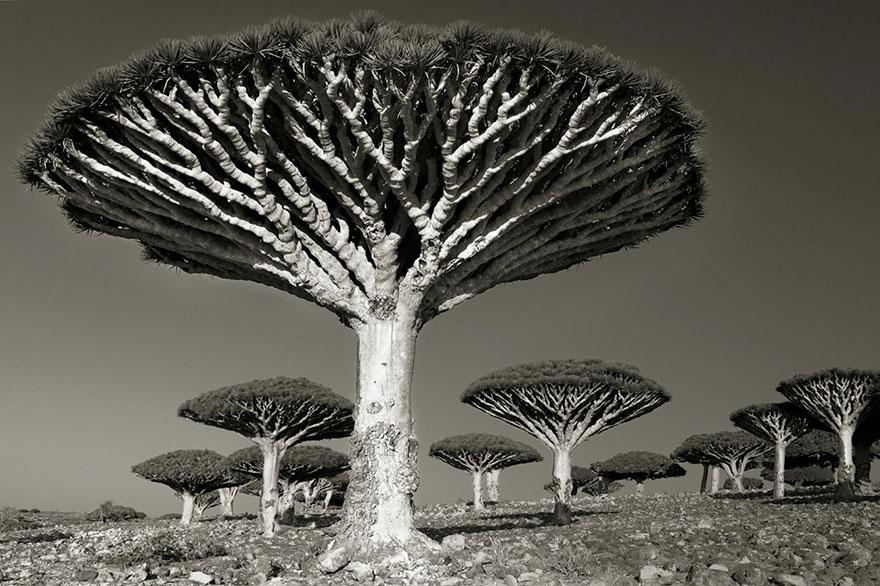 oldest-trees-beth-moon-11