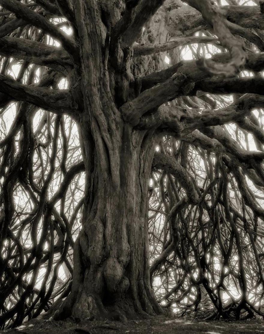 oldest-trees-beth-moon-15
