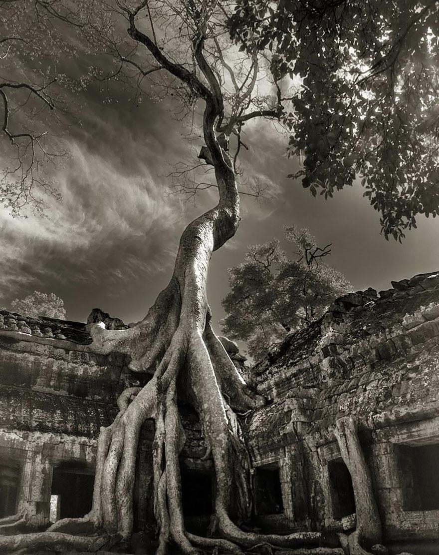 oldest-trees-beth-moon-16