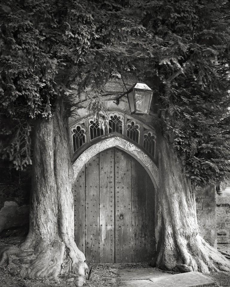 oldest-trees-beth-moon-9-768x960