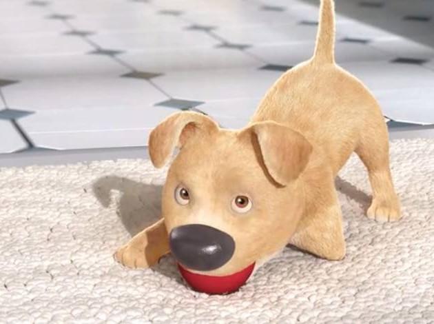 cucciolo video